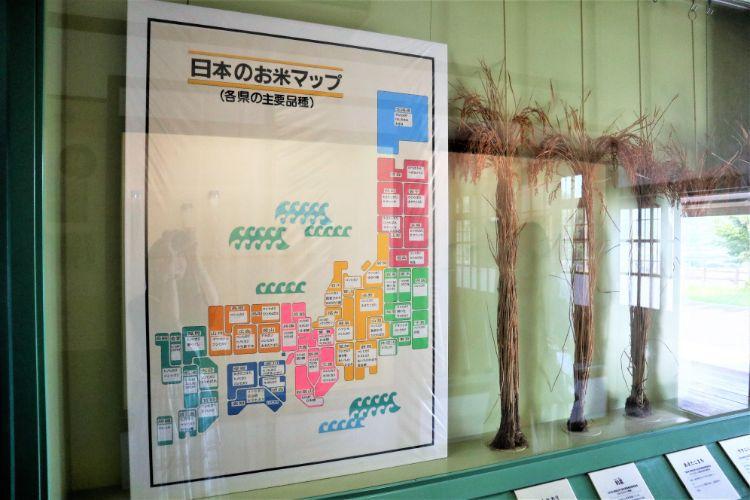 宇和米博物館 米 展示2