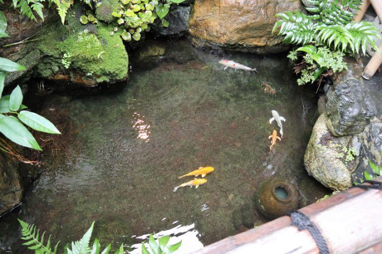 大岩 庭の池