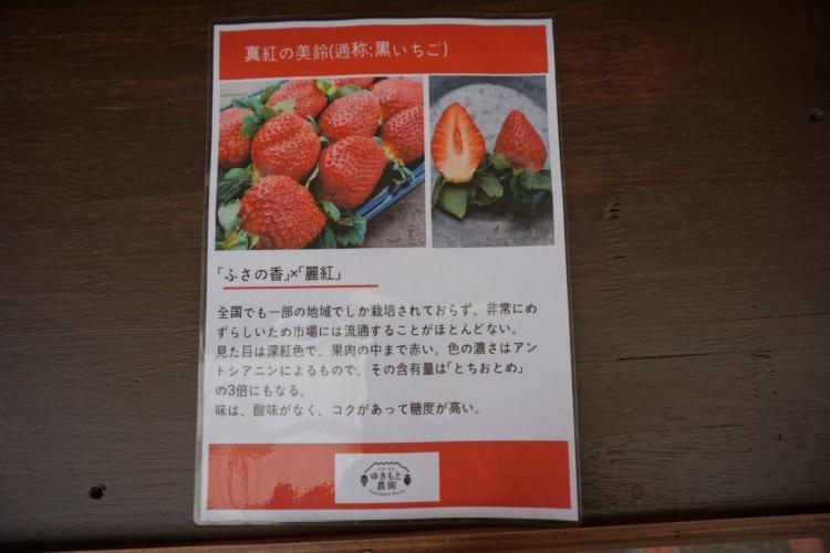 ゆきもと農園 黒イチゴ1