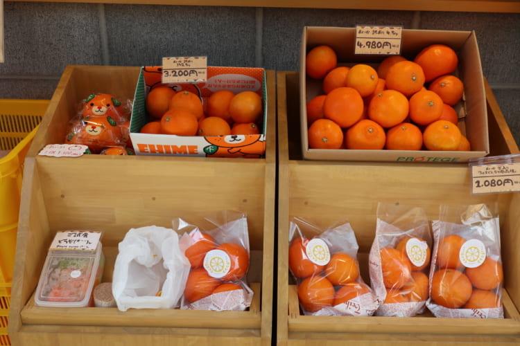 みかん×みかん 柑橘1