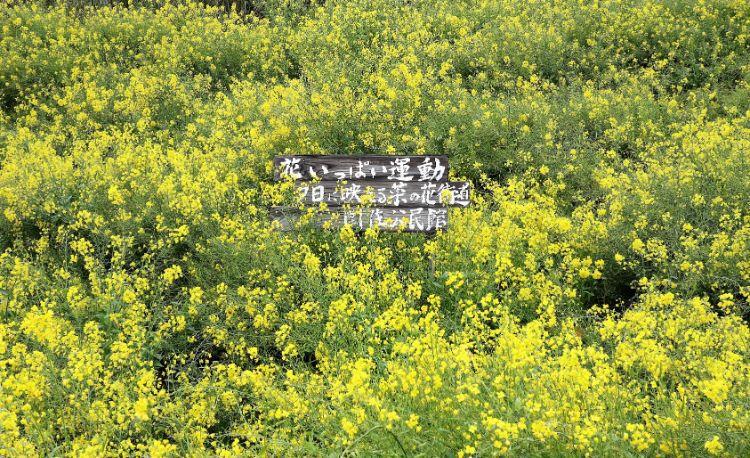 うるすみ 菜の花畑
