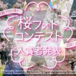 桜フォトコンアイキャッチ