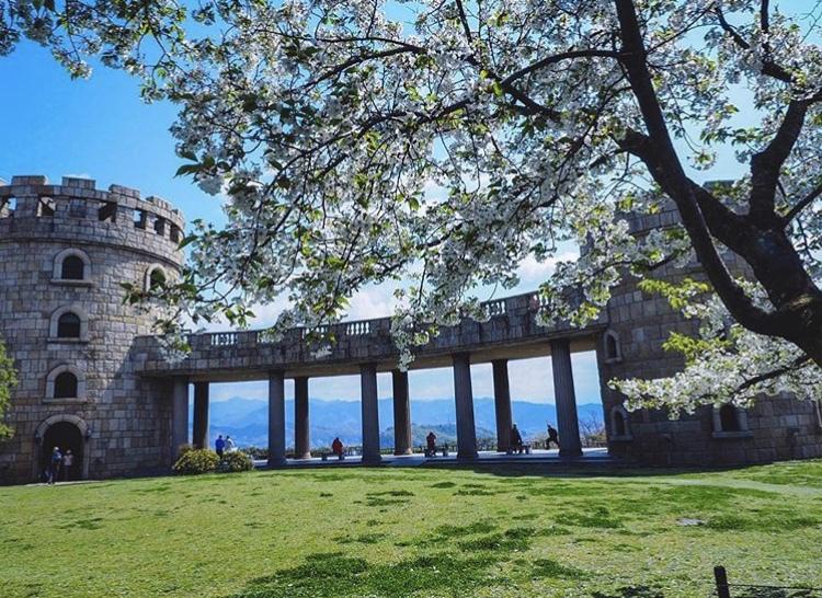 松山総合公園の桜