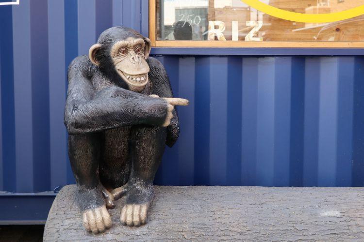 RIZ チンパンジー