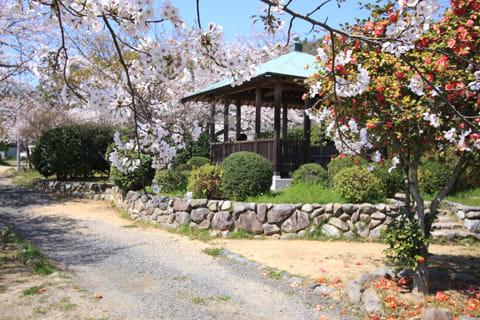 梅津寺公園1