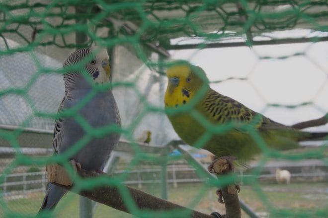いちごファーム北条小鳥