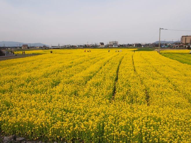 見奈良東の丘から