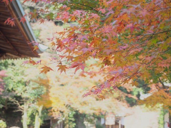 西山広隆寺の紅葉2