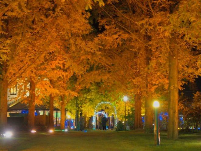 タオル美術館イルミネーションメタセコイヤの木々1