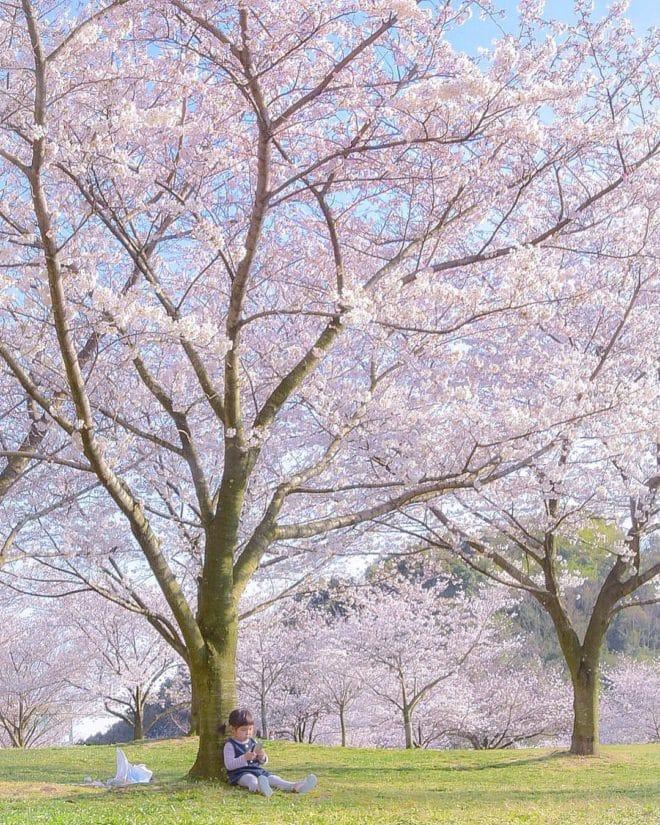 優秀桜フォト2018