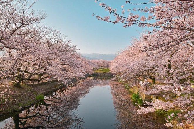 優秀桜フォト賞2018