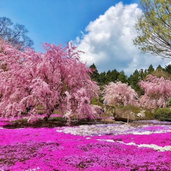 優秀桜フォト賞