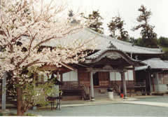 沖浦観音-愛媛県桜