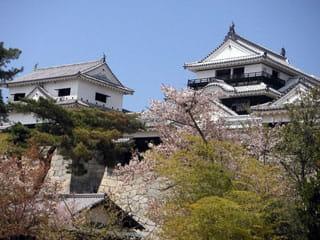松山城-愛媛県桜