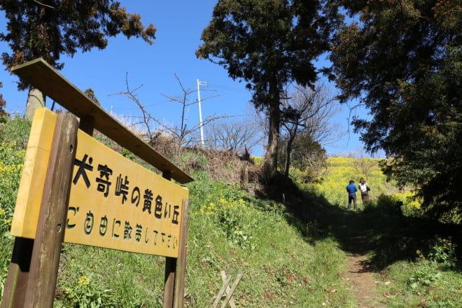 黄色い丘入り口