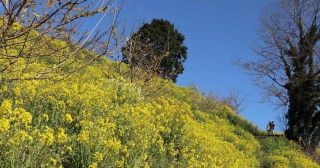 黄色い丘アイキャッチ
