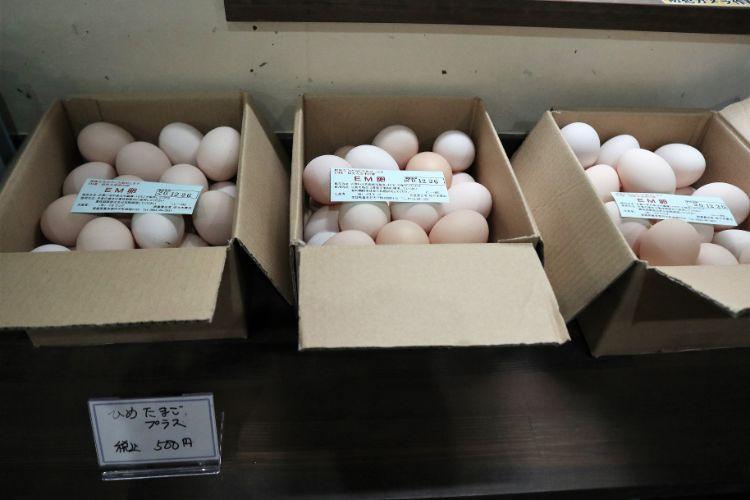 これか卵ショップ卵2