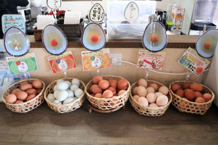 これか卵卵5種