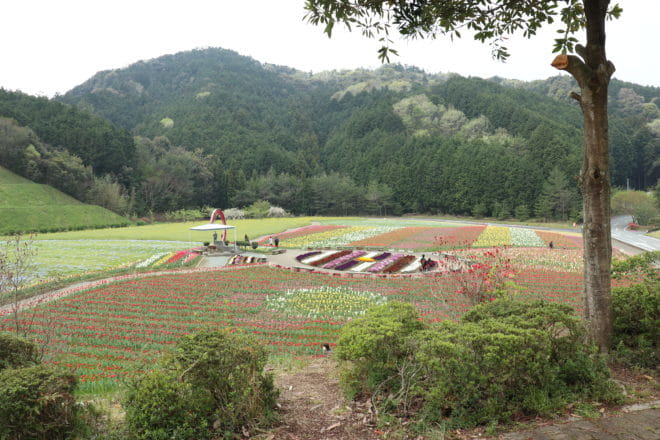 花見の丘1