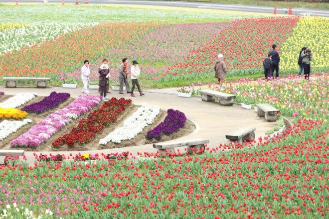 花見の丘2