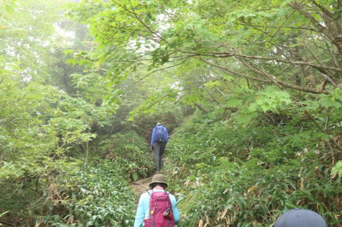 山頂近く登山道1