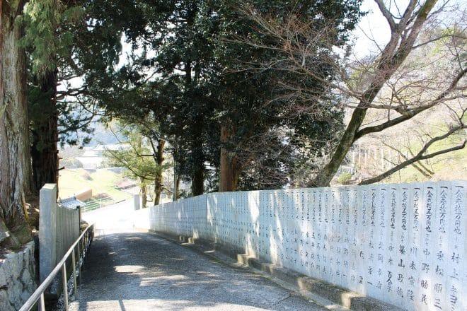 西法寺薄墨桜12