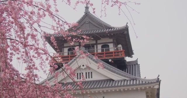 川之江城桜